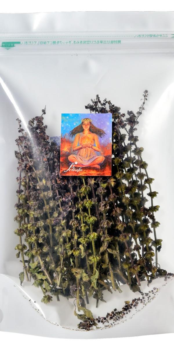 自然栽培ホーリーバジル